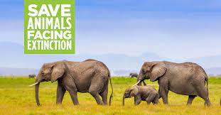 All in to stop species extinction